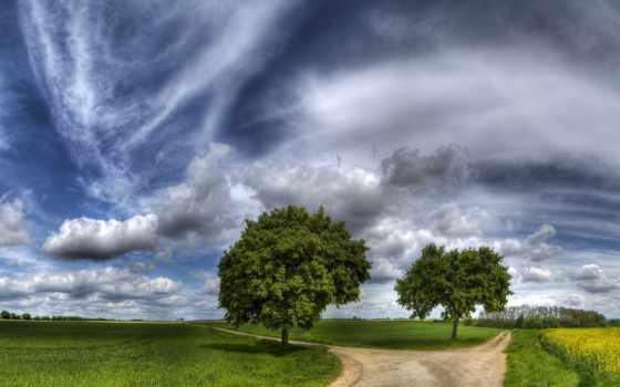 дорога, выбор, trees, поле, дороги, fork, небо, красиво, трава, тропинка, hayfield,