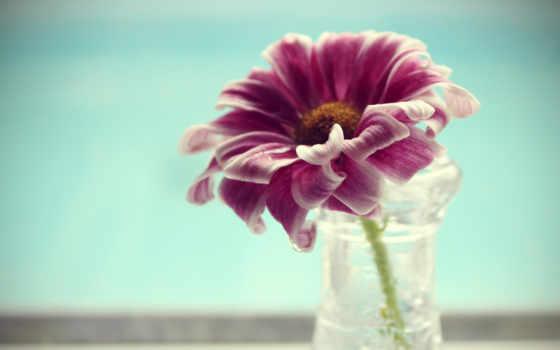 , cvety, лепестками, розовыми, лепестки, ваза, water, нежными, макро,