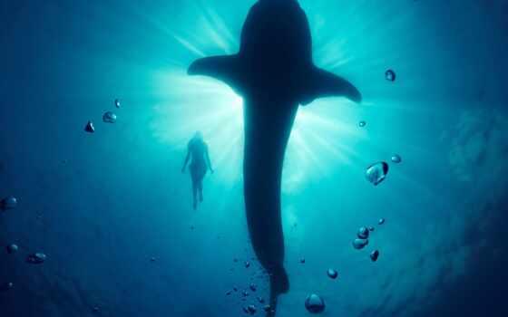 кит, underwater, модель, del, resolution, luna, ola