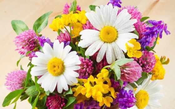 цветы, поле, букет, девушка, ромашка