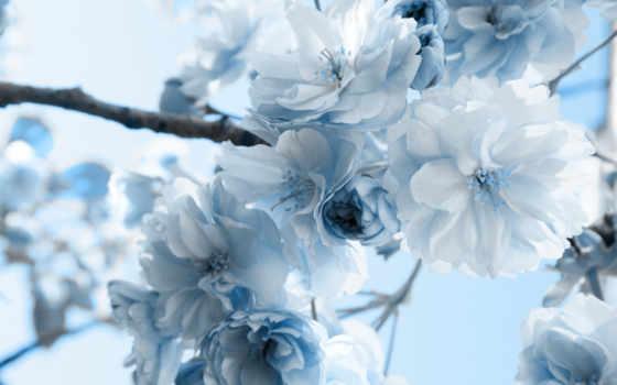 flowers, blue Фон № 8025 разрешение 1920x1080