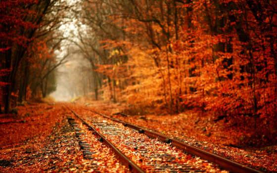 осень, дорога, желтая, листва, trees, лес, рельсы, аномалия, природа,