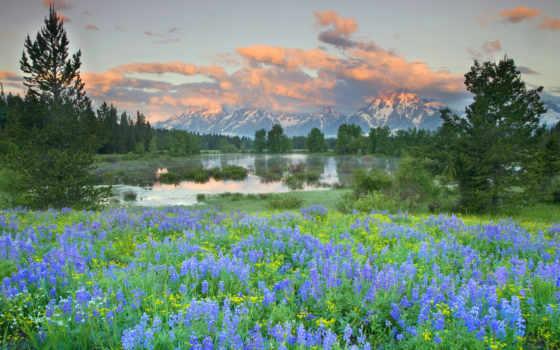 national, park, teton, grand, wyoming, yellowstone,