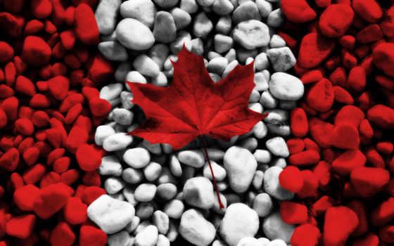 лист, maple, канадский