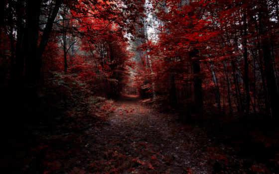 trees, free, shadows, тени, лес,