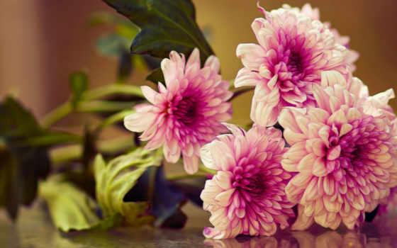 цветы, букет, страница, параметры, жанр, загрузок, качества, красивые,