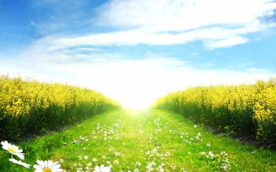 поле, margin, газоны, весеннее, банка, зеленое, дорога, ромашки,