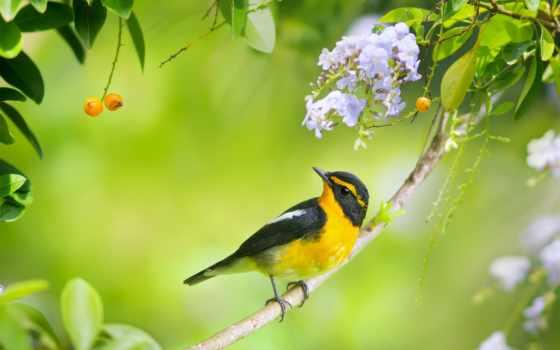 птицы, листва, youtube, коллекция, уже, спидовая, cvety, лучшая, загружено, loading,
