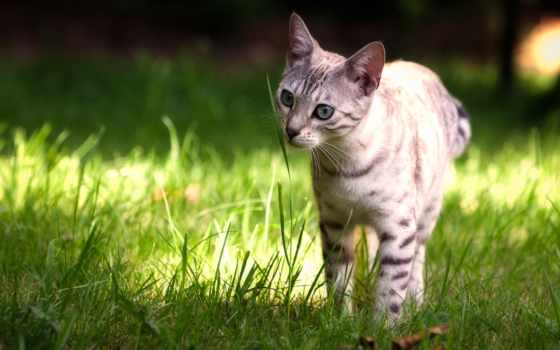 flickr, photos, hive, canon, mind, бенгальский, cats, кот,