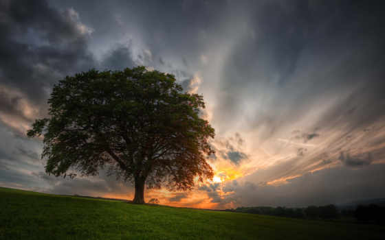 дерево, небо Фон № 32051 разрешение 1920x1080