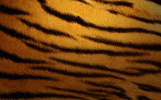 skin, тигра, текстура