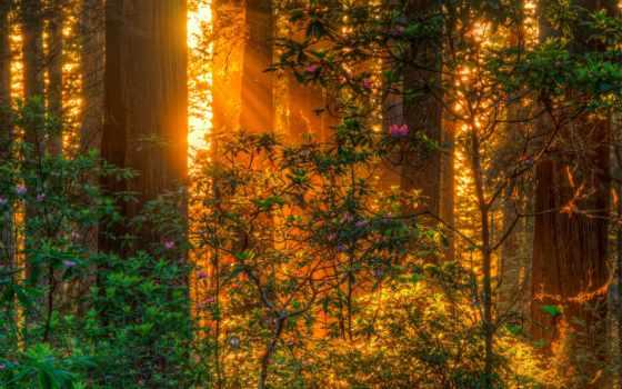 rays, природа, trees