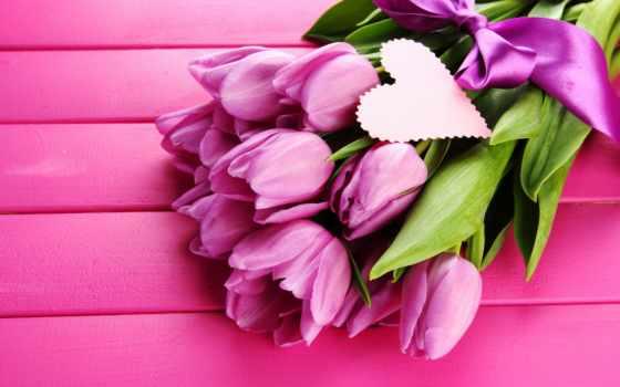 tulips, flowers, розовый, purple, cvety, мар, фон, социум,