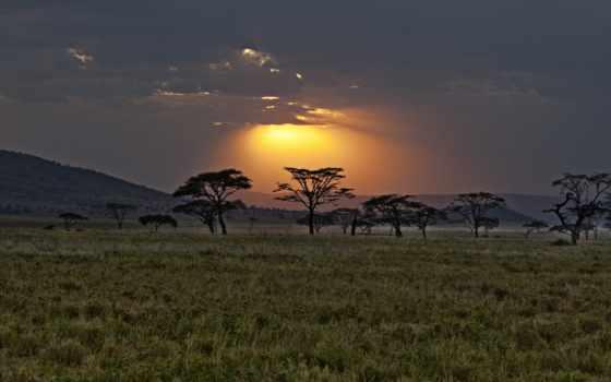 африка, саванна, закат, kenya,
