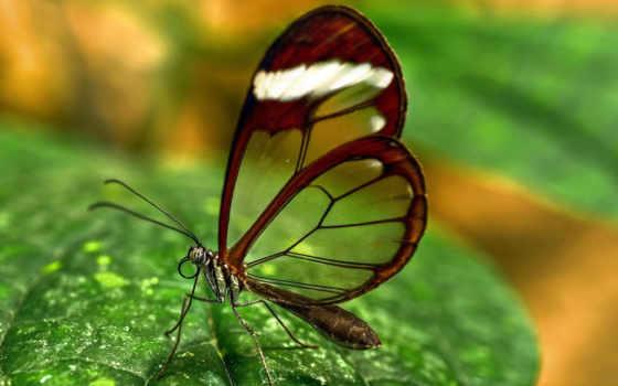 макро, насекомые, бабочки, subscribe, их, бабочка, они,