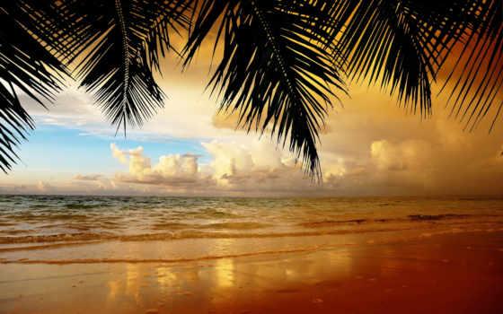 free, море, kartinik, закат, palm, оплата, россия, москва, доставка, manufacture