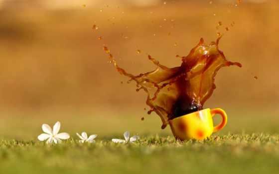 чая, coffee, cup, оранжевая, напиток, капли, брызги,