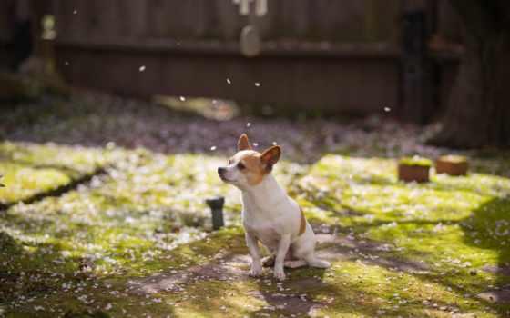 собака, весна, comments