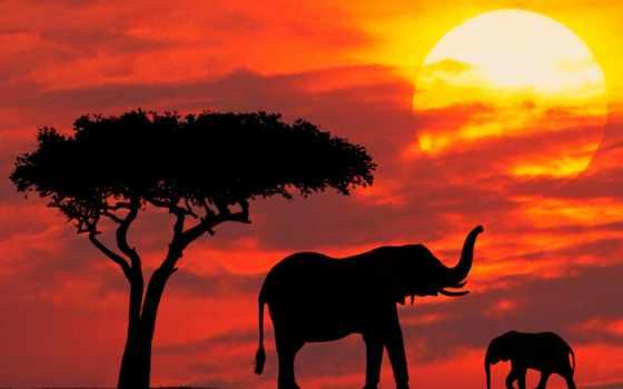 слоны, закат, слонов