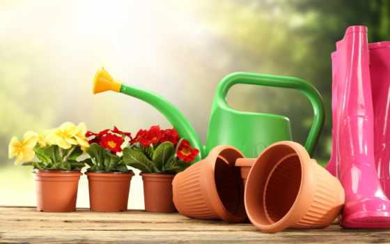 garden, предметы, газон, tools, flowers, первоцвет,