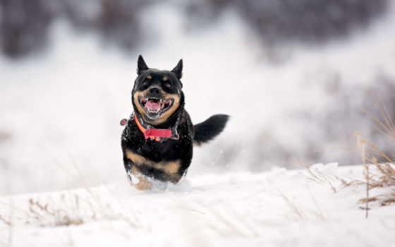 бежит, photos, flickr, popson, кот, снег, winter, собака, альберта,