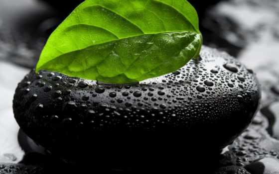капли, water, drop, листва, waters, лист, макро, камень, камни, красивые,