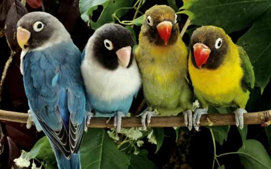 попугай, попугаи, птицы, zhivotnye, живые, ветке, цветные, qushlar, животными, magazin,