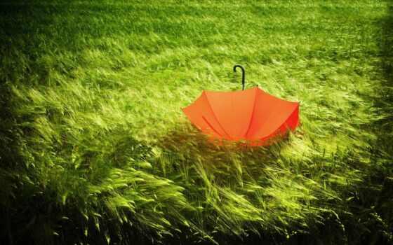 summer, природа, ложь, непогода, красивый, зонтик, трава, one