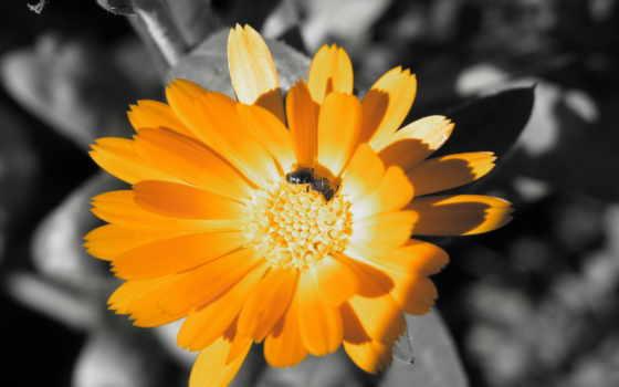 flower, hd