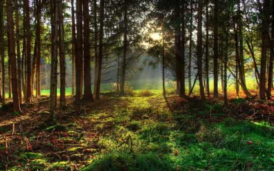 лес, деревья Фон № 26402 разрешение 1920x1200