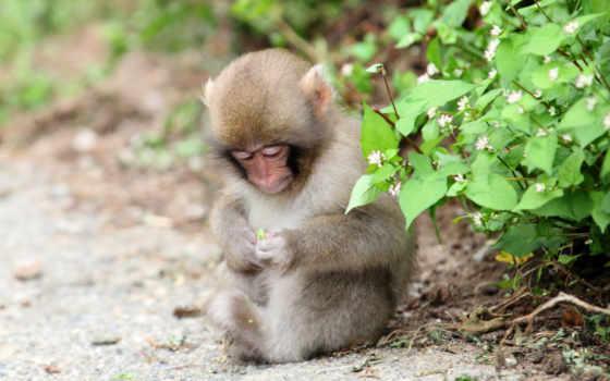 природа, обезьяна, животные