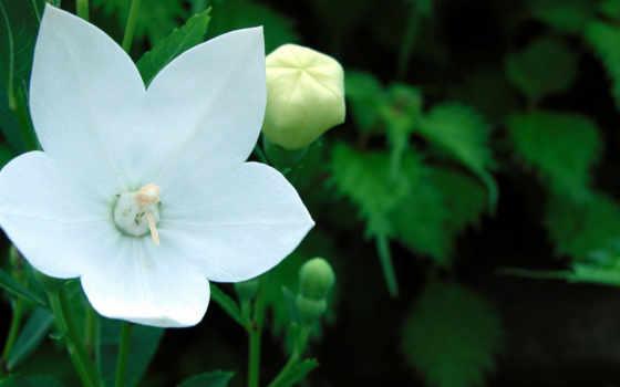 цветы, шикарных, цветов