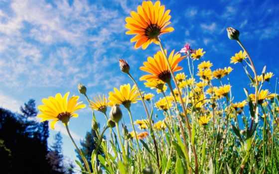 цветы, цветов, красивые