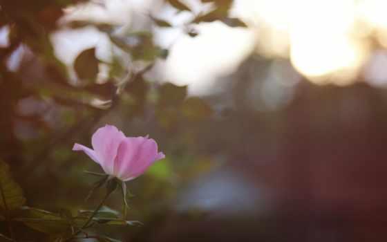 ткани, цветы, women,