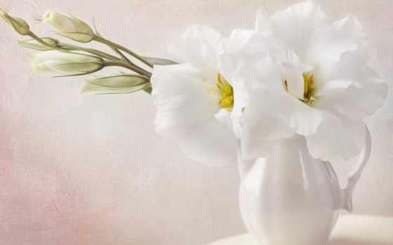 фотообои, интерьере, article, постеры, white, flowers, cvety, цветами, отложен,