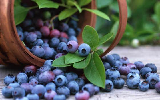 черника, desktop, еда, качество, blueberries,