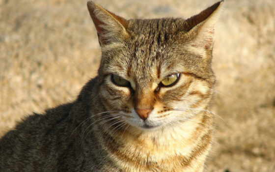 кот, злая, котенок