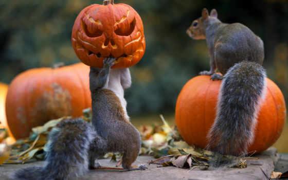 zhivotnye, белки, terrestrial, animals, halloween, белки, aquatic, card, который, яndex,