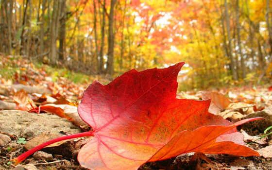 hour, осень, руб, today, рамки, лист, flash, time, погода, north