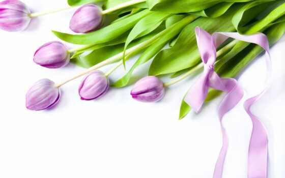 цветы, тюльпаны, тюльпан