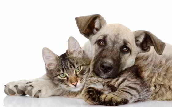 кот, собака, друзья, котенок, щенок, love, friends, вместе, embraces,