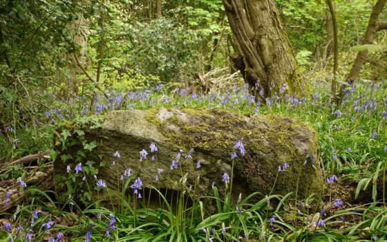 лес, широкоформатные, заставки, качественные, красивые,