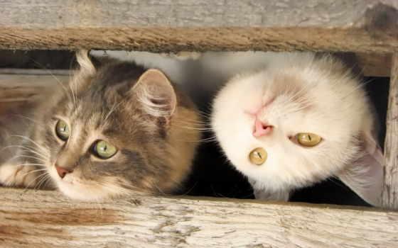 котики, милые, красивые, котиками, милыми, обсуждение,