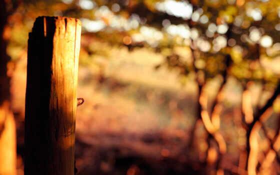 wood, природа, листва