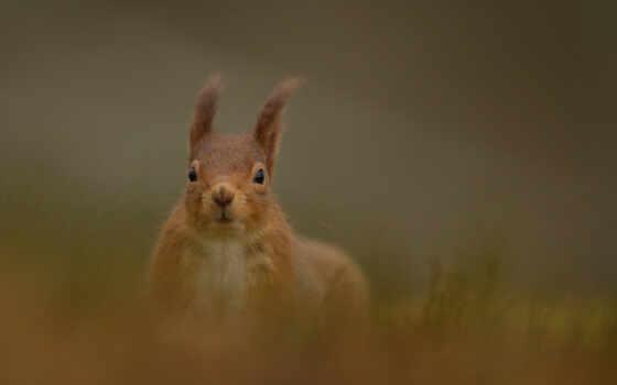 squirrel, squirell,