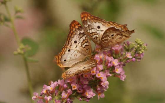 цветы, макро, бабочка