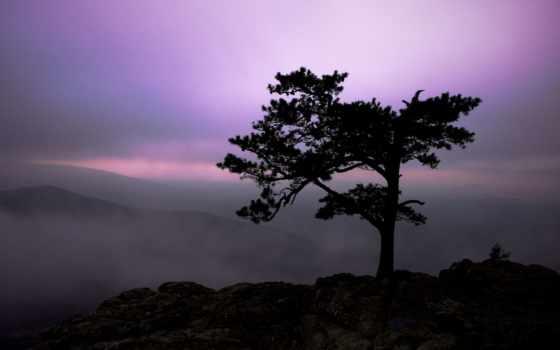 сумерки, landscape, природа, небо, горы, дерево, туман, свет,
