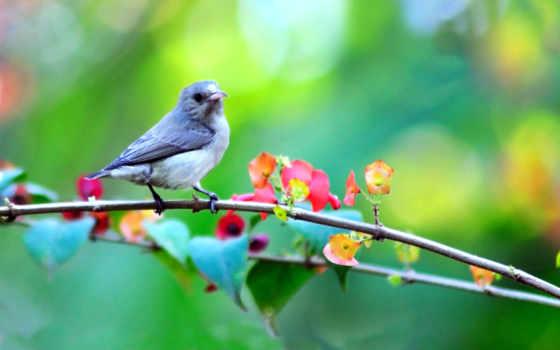 весна, cvety, природа