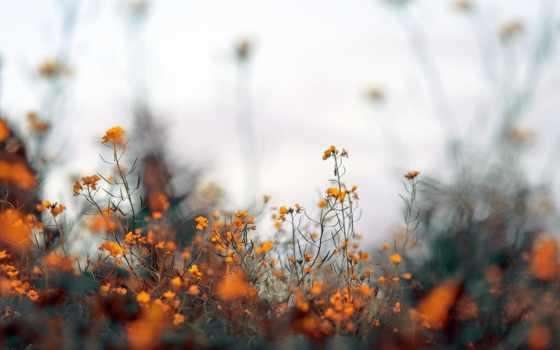 под, оранжевый, разных, cvety, оранжевые, старину, oldtimewallpape,