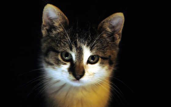 бесплатные, кошки, птицы, кот, ago, cribzer, instagram, парение, орлан,
